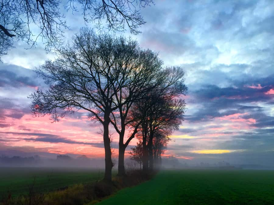 Line of trees against a cloudy red sunrise