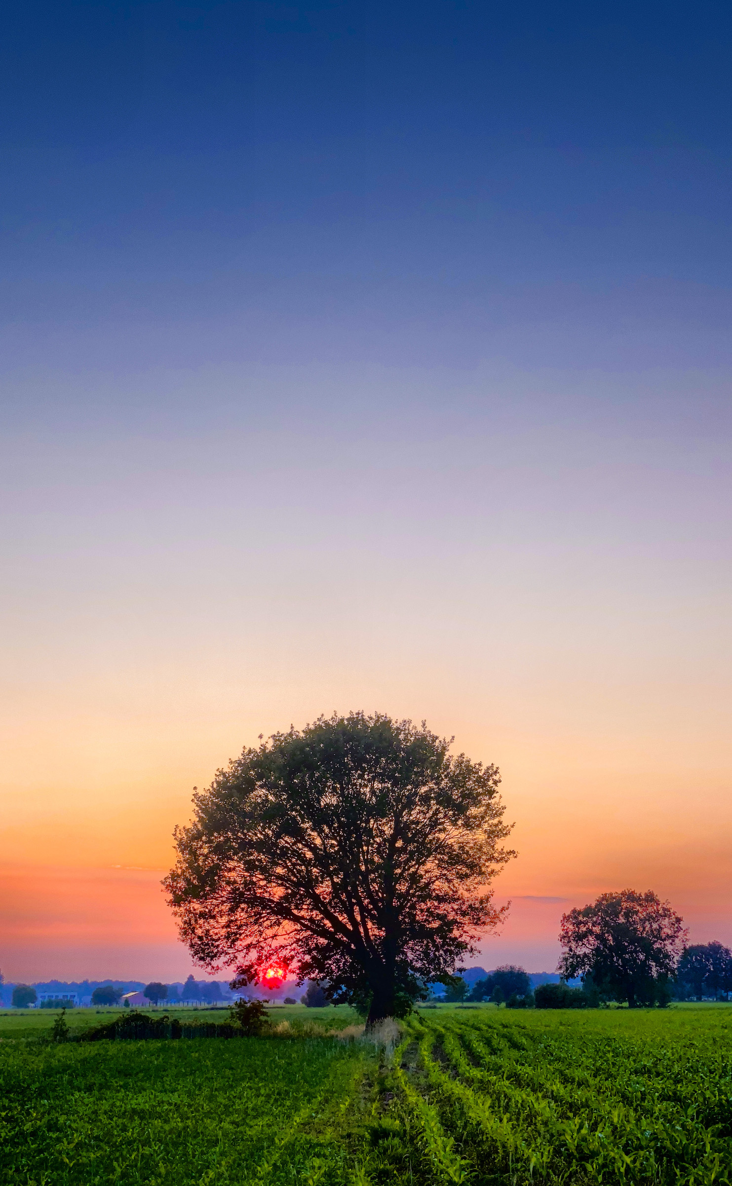 Farmfield tree under a gradient sunset sky